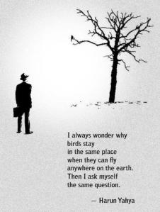 """I always wonder why birds stay in the same place when they can fly anywhere on the earth. Then I ask myself the same question."" - Harun Yahya"