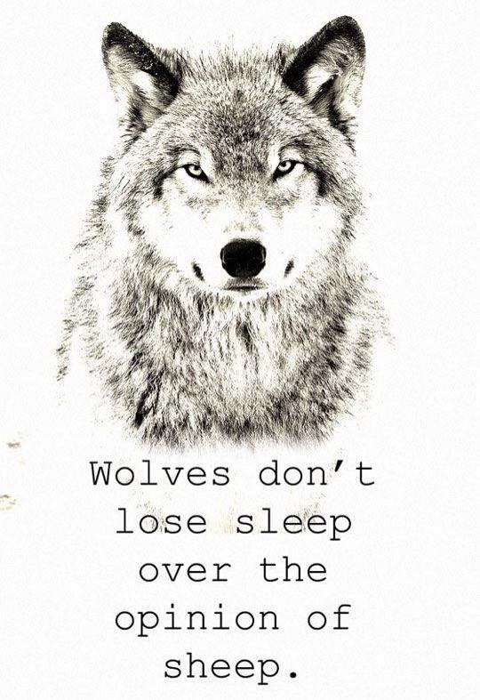 Native American Word For Wolves In Sheep S Clothing